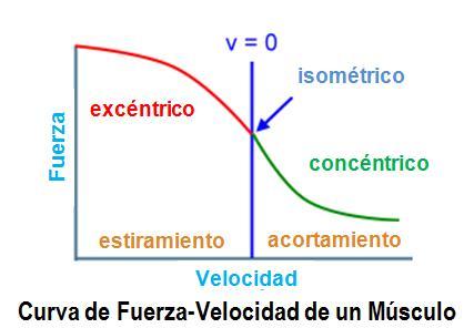 CurvaFuerzaVelocidad