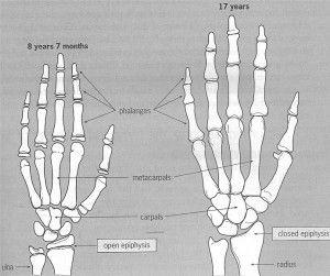 hands-diagram-300x251